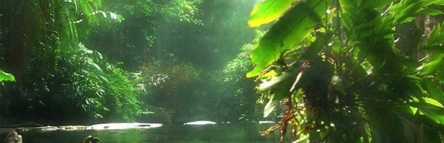 Les Plantes Amazoniennes